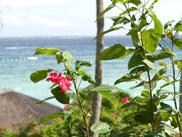 マクタン島リゾート地の植物